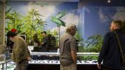 LA Times - Marijuana Legal.jpg